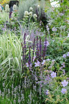 Salvia, Geranium, Lavender and grass, a great combo.