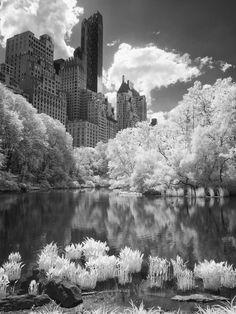 New York IR 13