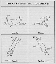 Meaning of Cat Tail Movements | Understanding the meaning ...