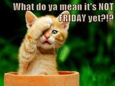 Nearly! Happy Thursday!