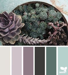 { succulent hues } image via: Design Seeds color palettes . posted daily for all who love color. Paint Schemes, Colour Schemes, Color Combos, House Color Schemes, Design Seeds, Cactus E Suculentas, Colour Pallette, Grey Color Palettes, Bedroom Color Palettes