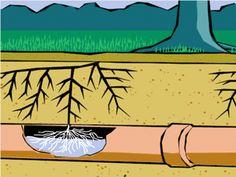 Csatorna gyökértelenítés  https://www.woma.hu/csatorna-gyokertelenites/  A csatornát egyszer kell jól megépíteni, és utána minden rendben, jól használható az idők végezetéig. No, ez nem igaz: még a legügyesebb mestert is megtréfálhatják később a szomszédból átnyúló gyökerek, a talajmozgás és a szennyvízcsatorna szerelvények elöregedése  #gyökértelenítés #csatorna_gyökértelenítés