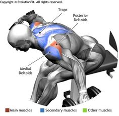 SHOULDERS -  SEATED BENT OVER DUMBELLS REAR DELT RAISE