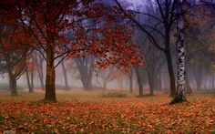 autumn by  ANTONI on 500px