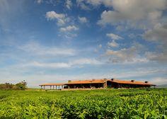 Nyungwe Forest Lodge Ruanda