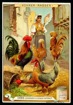 Liebig S531 - Types of Poultry #1  Liebig Beef Extract, German issue, 1897