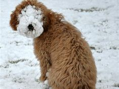 Snowdog. Funny dog photos. Dog fails.