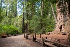 30 Most Beautiful Places to Visit in California - The Crazy Tourist Yosemite National Park, National Parks, Beautiful Places To Visit, Most Beautiful, State Parks, Big Basin Redwoods, Yosemite Falls, California, Future Travel