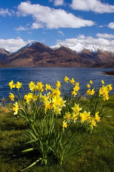The Five Sisters of Kintail from Ratagan in Spring . Loch Duich. North West Highlands. Scotland.