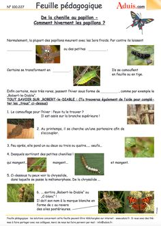 Des dizaines de fiches pédagogiques (les insectes) à exploiter avec vos élèves #littératie Science Experience, Preschool Kindergarten, Learn French, Natural, Activities, Education, Grade 2, Albums, Butterfly Project
