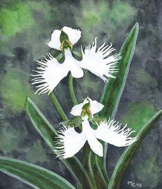 """Défi créateur Février 2014 """"Paix"""" : Aquarelle Orchidée colombe : Peintures par savousepate"""