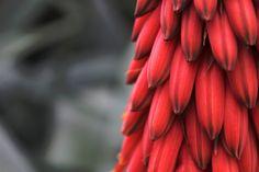 Pflanzenvielfalt steigert Erträge https://wissenschaftundschreie.wordpress.com/2012/05/22/pflanzenvielfalt-steigert-ertraege/