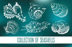 Hand drawn collection of 8 seashells by LarysaZabrotskaya on Creative Market