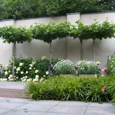 Porch Garden, Garden Plants, Home And Garden, Herb Garden Design, Garden Ideas, Plant Lighting, Garden Borders, Outdoor Rooms, Backyard