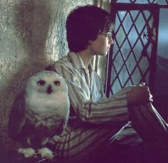 Harry Potter and Hedwig looking out the bedroom window at Hogwarts. One of my favorite scenes. Harry James Potter, Hedwig Harry Potter, Harry Potter World, Mundo Harry Potter, Harry Potter Characters, Harry Potter Universal, Philosopher's Stone Harry Potter, Harry Potter Library, Harry Harry