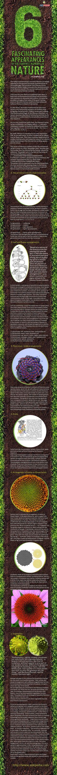 Beautiful infographic: 6 Fascinating Appearances of the Fibonacci Numbers in Nature