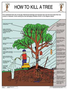 How to Kill A Tree: This guide illustrates how improper tree care can lead to the shortage of your tree's life!How to Kill A Tree. Mistakes that Kill a Tree might need this for those stupid box elder trees.' Mechanical damage and improper tree care