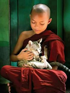 Young Buddhist Monk with a cat - love for all sentient beings. 'One is not noble who injures living creatures. They are noble who hurt no one. Cute Kittens, Cats And Kittens, Karma Yoga, Image Chat, Little Buddha, Photo Chat, Buddhist Monk, Cat People, Baby Kind