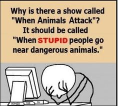 Why Is There A Show Called When Animals Attack ?,  Click the link to view today's funniest pictures!