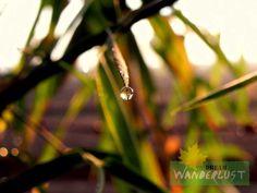 A drop of sun  Photo Credits: Saikat Das    http://www.dreamwanderlust.com/rainy-days.php
