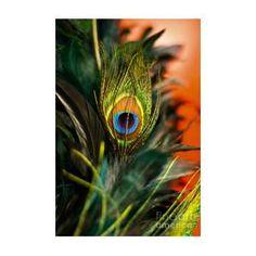 Eye by Lana Muriyan Blue Flower Wallpaper, Feather Wallpaper, Lord Krishna Images, Krishna Pictures, Happy Diwali Wishes Images, Iron Man Art, Lord Krishna Hd Wallpaper, Cute Cartoon Girl, Krishna Painting