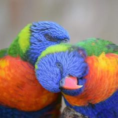 Parrot, Yoga, Animals, Beautiful, Instagram, Rabbits, Dog, Cute Animals, Love