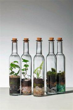 used glass bottles terrarium #plantasdecorativas