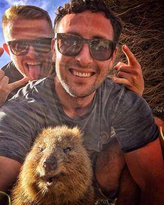 Rottnest Island Quokka Selfie  #rottnestisland #quokka #selfie #perth #australia #amazing_wa #perthisok #perthlife #adventure #travel #nature by ricksmyth http://ift.tt/1L5GqLp