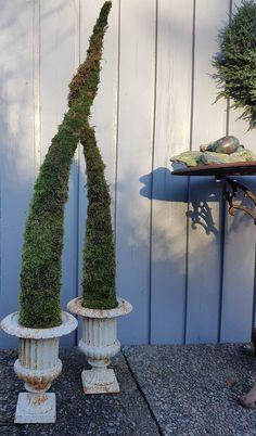 Et alternativt juletre som ikke drysser.   SkarpiHagen Plants, Alternative, Plant, Planets