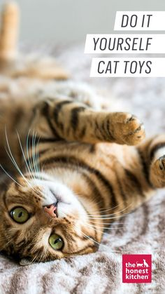 Here are a few piece-of-cake DIY cat toys that you can whip up from stuff that's already floating around your house. Diy Cat Toys, Home Activities, Cat Boarding, Diy Cake, Life Is Good, Easy Diy, Kitty, Pets, Fun