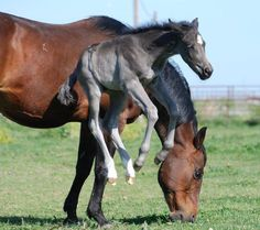 Spring time foal