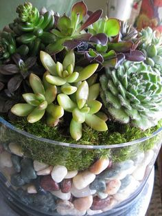 A thick glass planter/vase suited for the terrarium proper and allows to see the layers of moss, stones, and succulents as I would cake, cream, and fruit in a trifle dish…