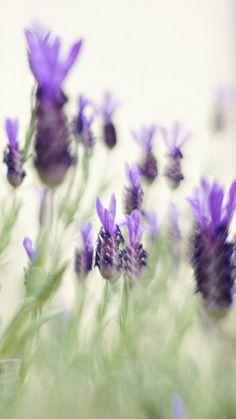 lavender by Juri Pozzi, via Flickr  @Ida Christine Kvisgaard