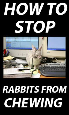 How to stop rabbits from chewing