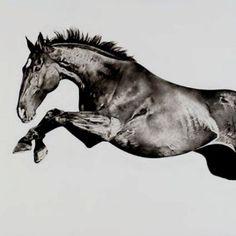#Horse #Jumps  www.thewarmbloodhorse.com