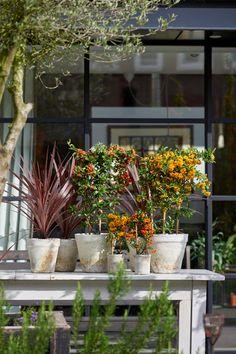 HK Groen Tuinplant van de Maand Oktober 2018 Vuurdoorn Winter, Plants, Image, Garden Plants, Autumn, Winter Time, Plant, Winter Fashion, Planets