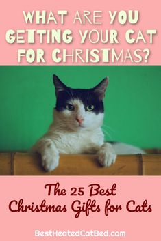We have come up with a list of perfect presents that are certain to please! We are sure that you can find exactly what you are looking for on our list of Christmas gifts for kitties. Heated Cat House, Heated Outdoor Cat House, Heated Cat Bed, Christmas Ties, Best Christmas Gifts, Ugly Christmas Sweater, Cat Backpack Carrier, Heating Pads, Cute Stockings