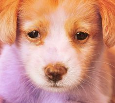 :-) Corgi, Cute Animals, Creatures, Pets, Pretty Animals, Corgis, Cutest Animals, Cute Funny Animals, Adorable Animals