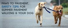 Do you know how hot is to hot for your dogs paws?  Read more to learn! http://www.sitstay.com/blogs/good-dog-blog/191121735?utm_campaign=coschedule&utm_source=pinterest&utm_medium=SitStay%20Dogs&utm_content=Paws%20to%20Pavement%2C%20Safety%20tips%20for%20Summer%20Pavement%20Walking%20and%20your%20Dog