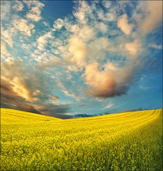 Find images and videos about photography, sky and clouds on We Heart It - the app to get lost in what you love. Beautiful World, Beautiful Places, Beautiful Sky, Bosnia Y Herzegovina, Canola Field, Light Spring, To Infinity And Beyond, Mellow Yellow, Albania