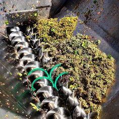 Volcado de uva en la tolva de recepción de la bodega. #Vendimia2015 #Montilla #MontillaMoriles #Vino #Wine #Bodega #Winery #Andalucía #Andalusia #TuMejorTu #LoMejorDeTodos by agenciamontur