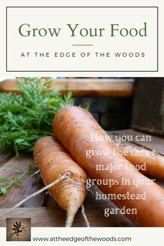How you can grow the three major food groups in your homestead garden Planting Fruit Trees, Fruit Plants, Food Groups, Group Meals, Growing Vegetables, Fruits And Vegetables, Flint Corn, Strawberry Beds, Cultured Buttermilk