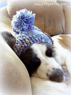 Free Crochet Pattern ~A Silly Hat For My Silly Dog www. Free Crochet Pattern ~A Silly Hat For My Silly Dog www. Crochet Dog Hat Free Pattern, Free Crochet, Knitting Patterns, Knit Crochet, Crochet Patterns, Double Crochet, Single Crochet, Crochet Dog Clothes, Crochet Dog Sweater