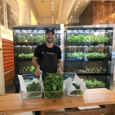 Farmshelf, an indoor farm that lets you grow lettuce and herbs, is sprouting up at restaurants, corporate kitchens and food halls around the country Home Hydroponics, Hydroponic Gardening, Aquaponics, Container Gardening, Urban Agriculture, Urban Farming, Urban Gardening, Indoor Farming, Indoor Gardening
