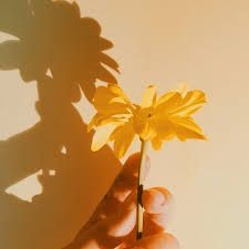 Another yellow aesthetic image! Yellow Aesthetic Pastel, Gold Aesthetic, Aesthetic Colors, Flower Aesthetic, Aesthetic Images, Aesthetic Wallpapers, Baby Yellow, Pastel Yellow, Mellow Yellow
