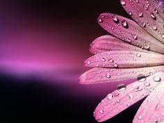 flower hd background 0161