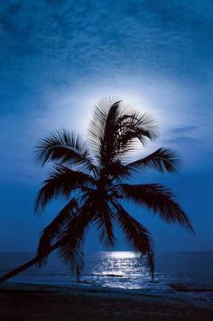 An enchanting scene of a palm tree and beach backlit by the full moon - A bit of…