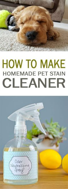 How to Make Homemade Pet Stain Cleaner 101 Days of Organization Natural Cleaning Recipes, Homemade Cleaning Products, Natural Cleaning Products, Natural Products, Diy Cleaners, Cleaners Homemade, Natural Cleaners, Green Cleaning, How To Make Homemade