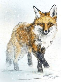 Fox in Snow Learning how to draw a fox walking, good for cartoons,Sketching Foxes, Art Tutorial and Inspiration for Drawing Fox, for fans of Wonderweirded-wil... fox,foxes,red fox, wild, drawing, sketching sketchbook, art
