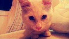 Tintin, mi bebé. Cats, Animals, Bebe, Gatos, Animales, Animaux, Animal, Cat, Animais